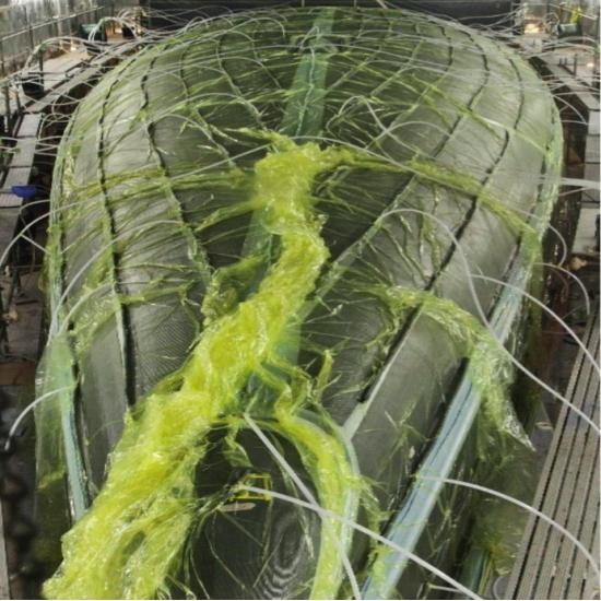 Infusion Vinylester resin 4 kg | CHEMIFY